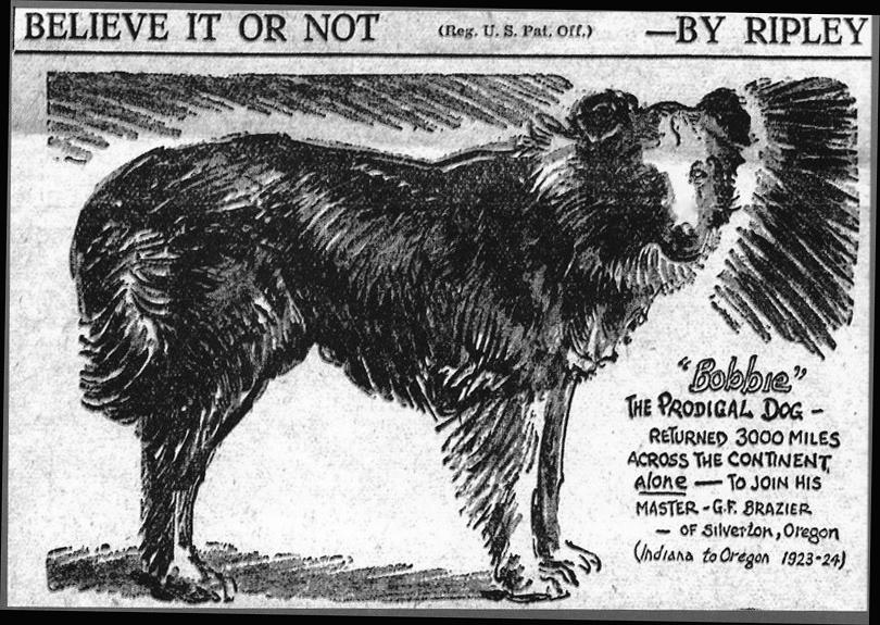 BOBBIE THE SUPER WONDER DOG